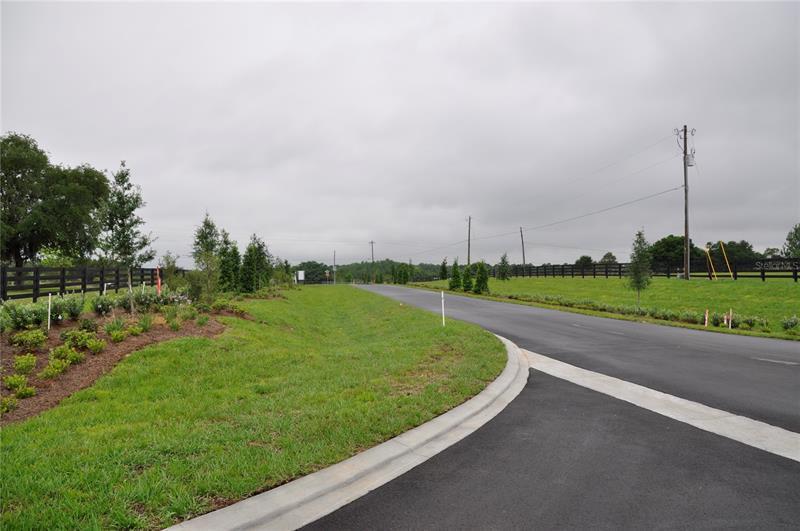 Oak Pointe Preserve Lot 16 CLERMONT  34711